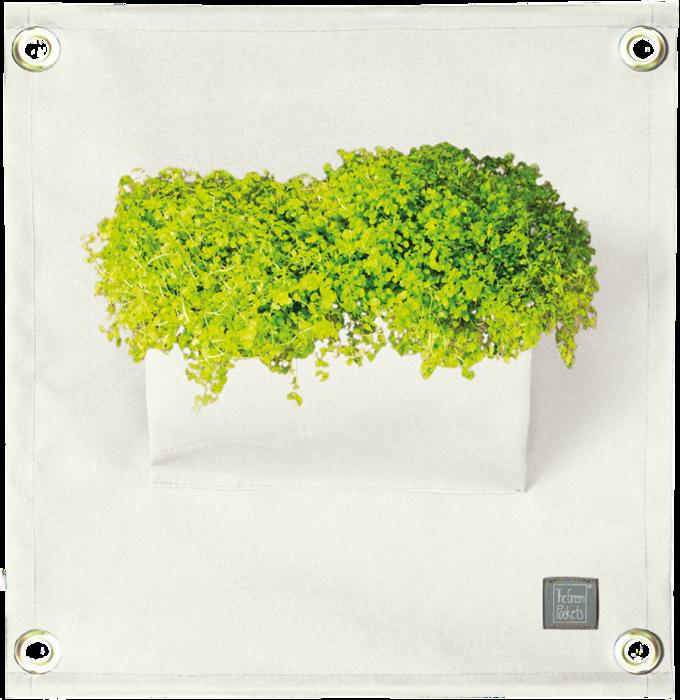 The Green Pockets® AMMA White