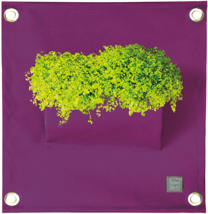 The Green Pockets® AMMA Purple