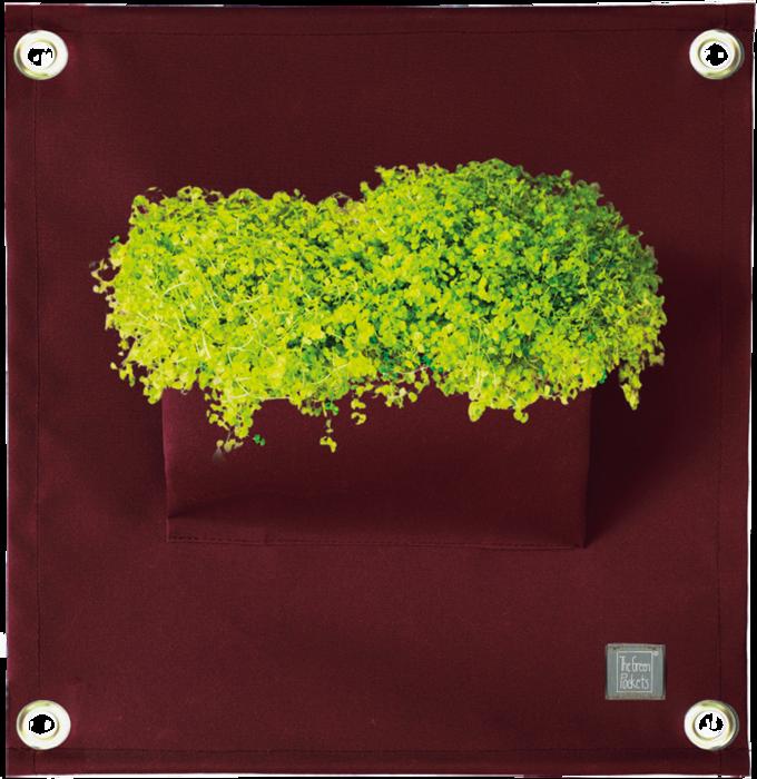 The Green Pockets® AMMA Wine